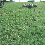 Ovčí pletivo akce! Nabízíme veškerý sortiment ovčího pletiva s rozvozem po celé ČR!